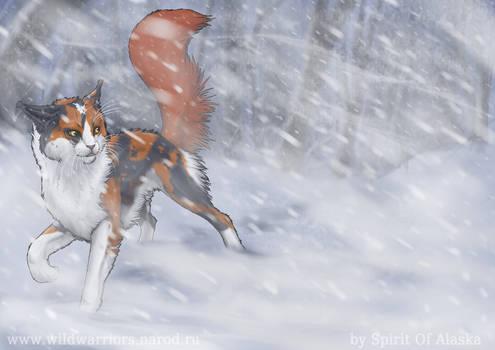 Redtail by Spirit-Of-Alaska