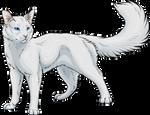 White Tom by Spirit-Of-Alaska
