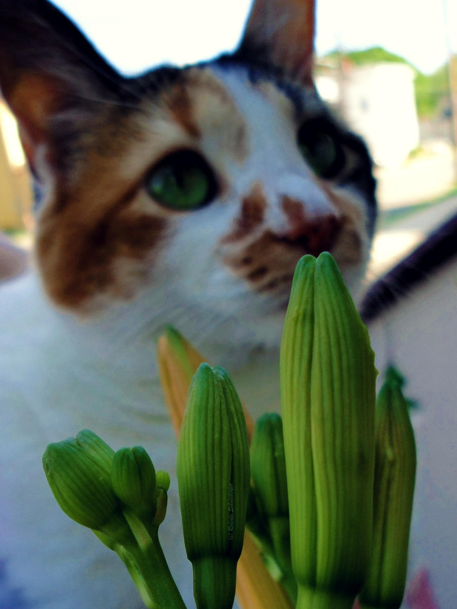 Lilcat