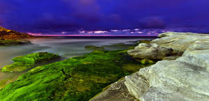 Moss at Maroubra by MarkLucey