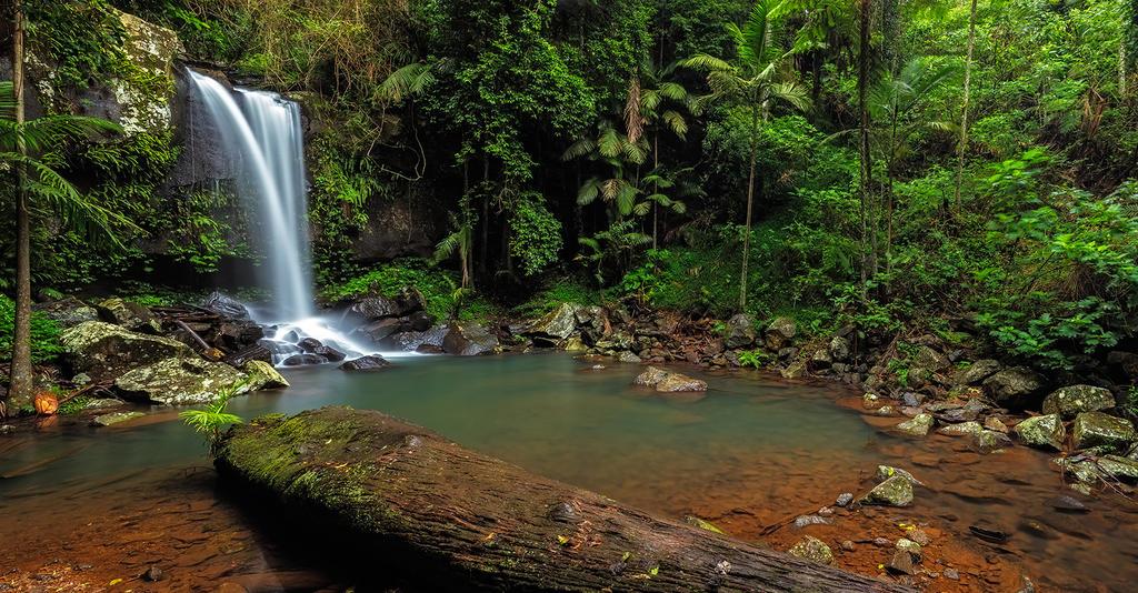 Curtis Falls - Mt Tamborine by MarkLucey