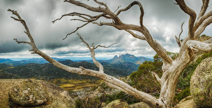 Cresta Valley - Mt Buffalo