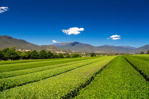 Tea in the Valley by MarkLucey