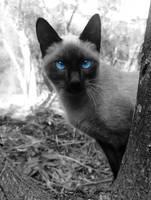 Cat by danielyh