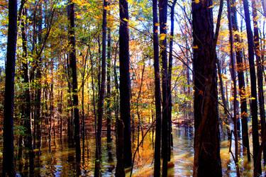 Lake's colors