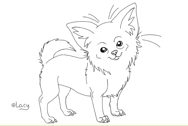 Chihuahua lineart by xx lacy xx for Chihuahua coloring pages