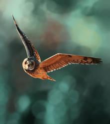 Owl Stadic