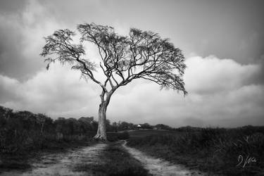 The Tree and Path by domwphoto