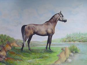 Le Cheval de Karacabey