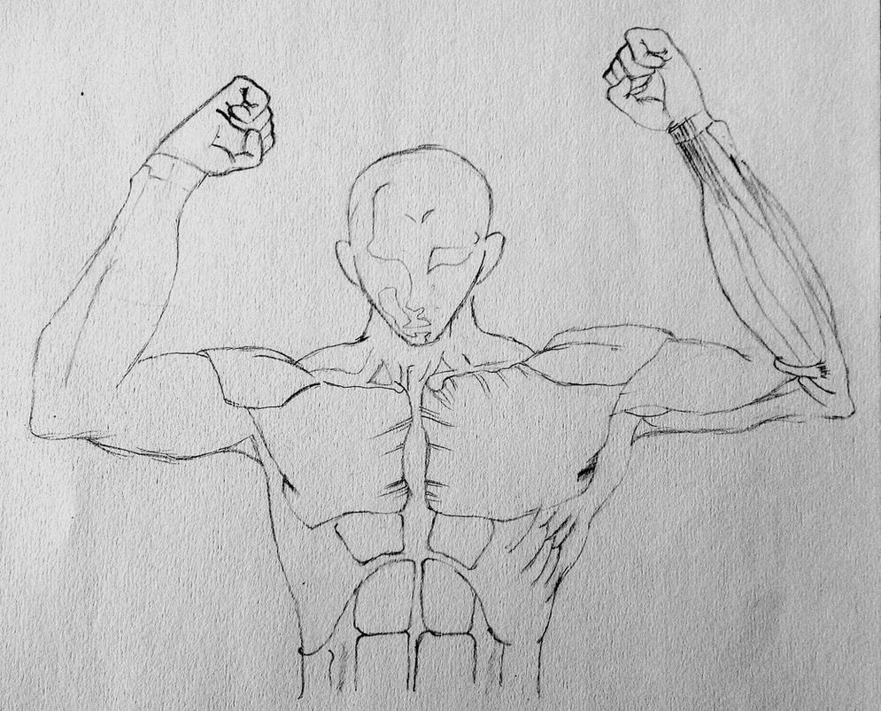 Body Muscle Parts progress (Anatomy Drawing) by Fukarin97 on DeviantArt