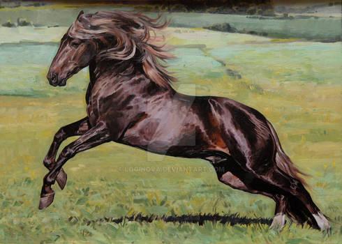 Starters stallion.