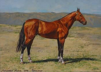 Gundogar. Akhal-Teke stallion by Loginova