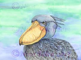 Shoe Bill Stork Watercolor Painting