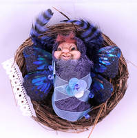 Baby Pixie with blue wings