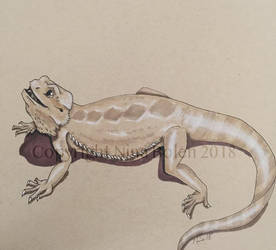 Bearded Dragon Drawing