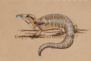 Blue tongued skink drawing