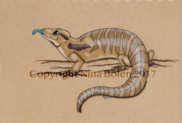 Blue tongued skink drawing by The-GoblinQueen