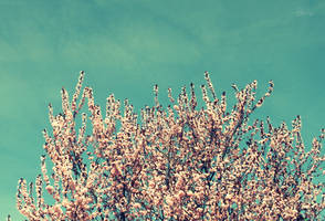 Spring is back. by LasuperEroa