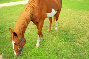 Horse on empty riverbank