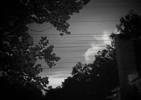 Telephone wires with trees