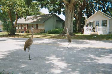 Cranes again