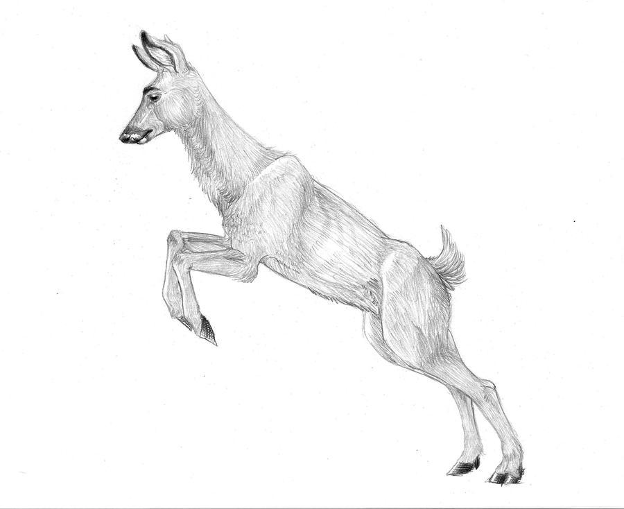 Deer Hoof Drawing Not Make The Deer i Draw