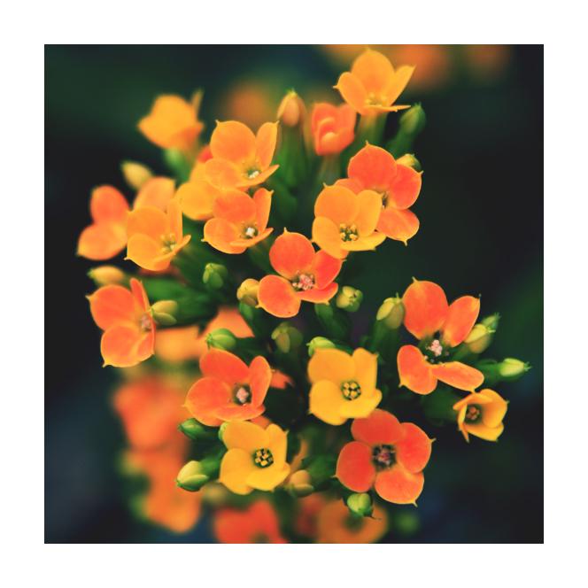 Turuncu çiçek resimleri