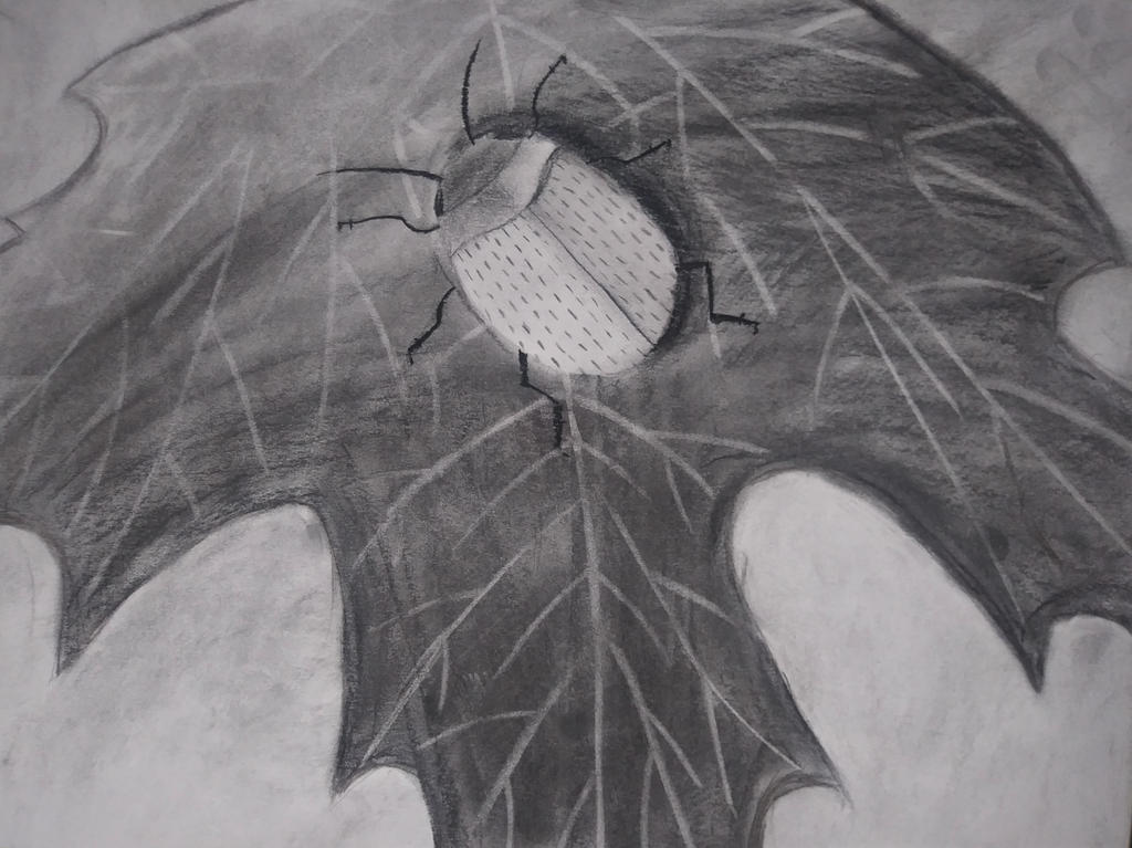 Charcoal drawing Beetle by icedragonsheart