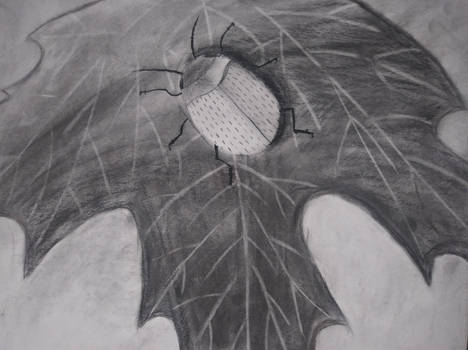 Charcoal drawing Beetle