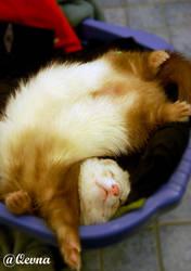 My way of sleeping by Qevna
