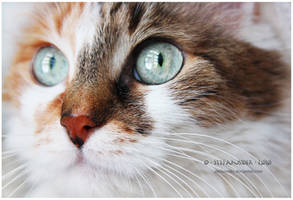 Dusia, the cat by Stefansider