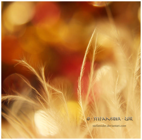 it looks like autumn by Stefansider