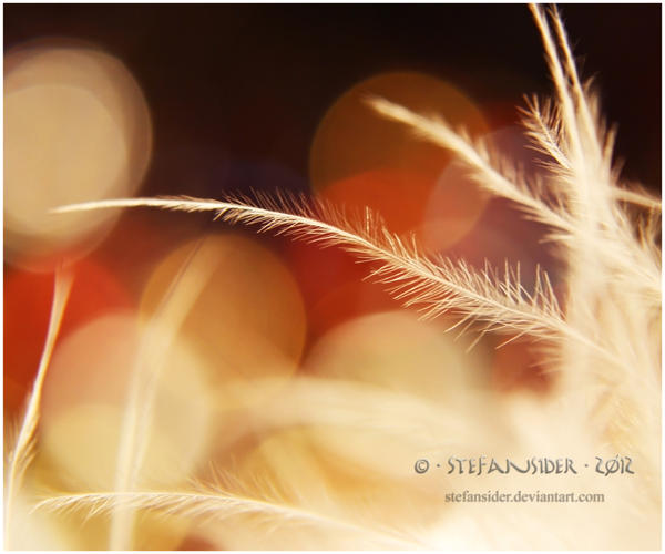 red sunrise by Stefansider