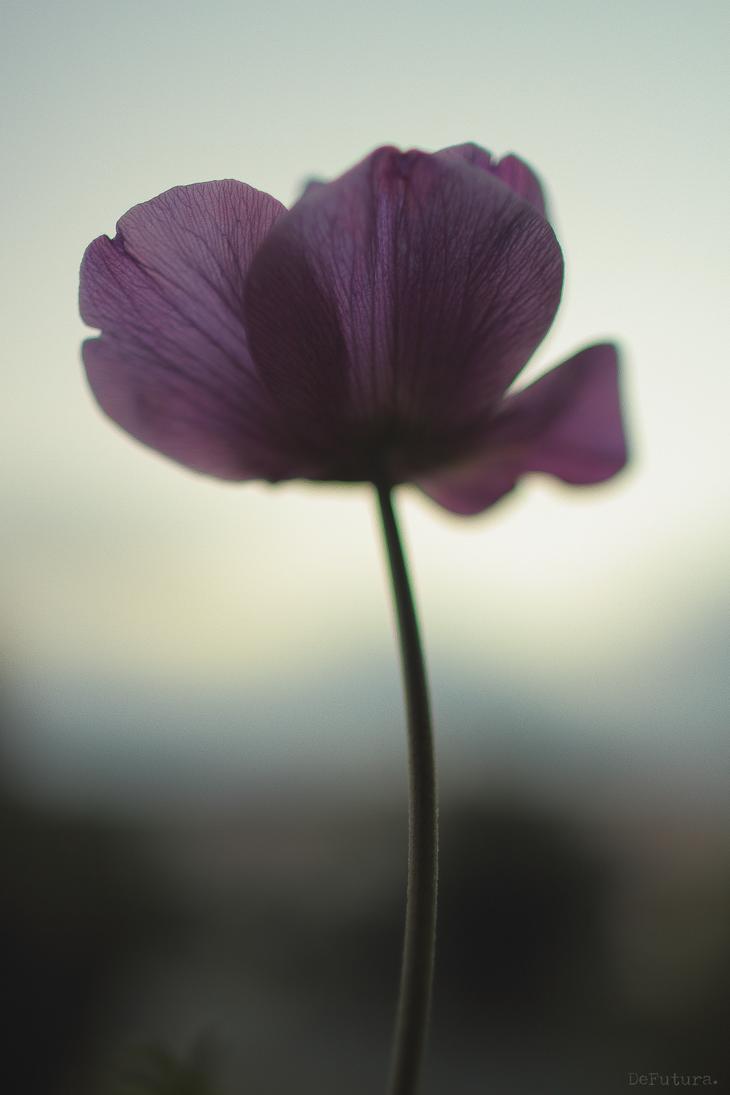 Dawn by DeFutura