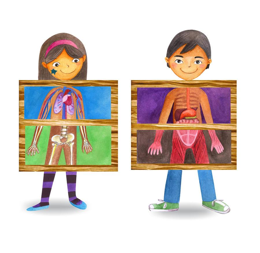 Human anatomy kids