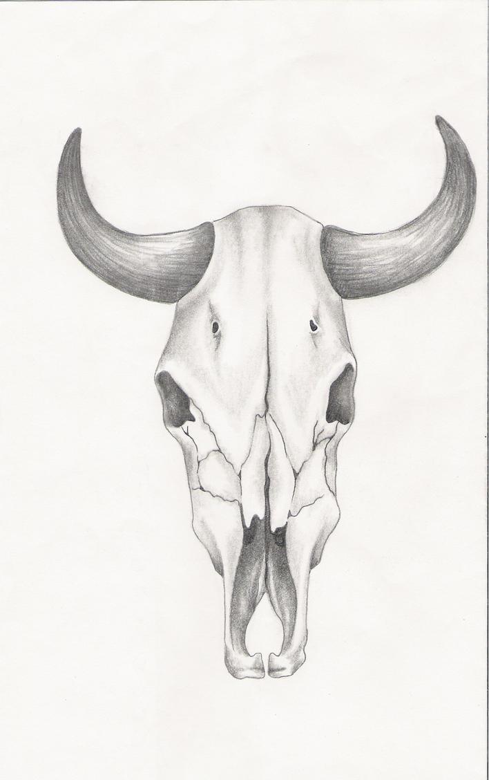 steer skull drawing wwwimgkidcom the image kid has it