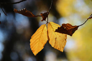 polish autumn by Shreever