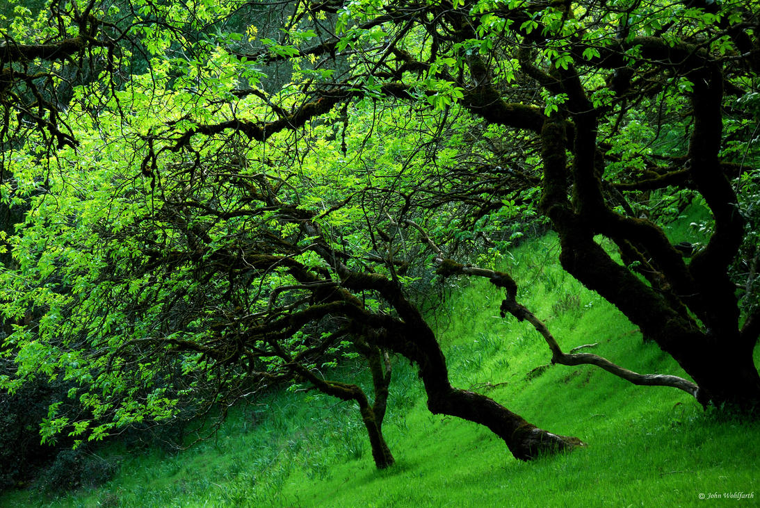 Green and Gold by Orcadus