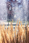 Grass and Fountain
