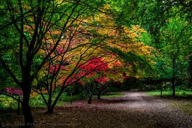 Autumn Gardens Pathway, Queen's Wood by Penson37