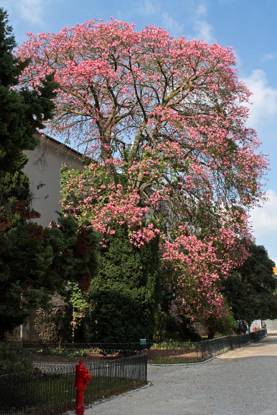 Arbol de flores rosas by serendipi7y on deviantart - Arbol de rosas ...