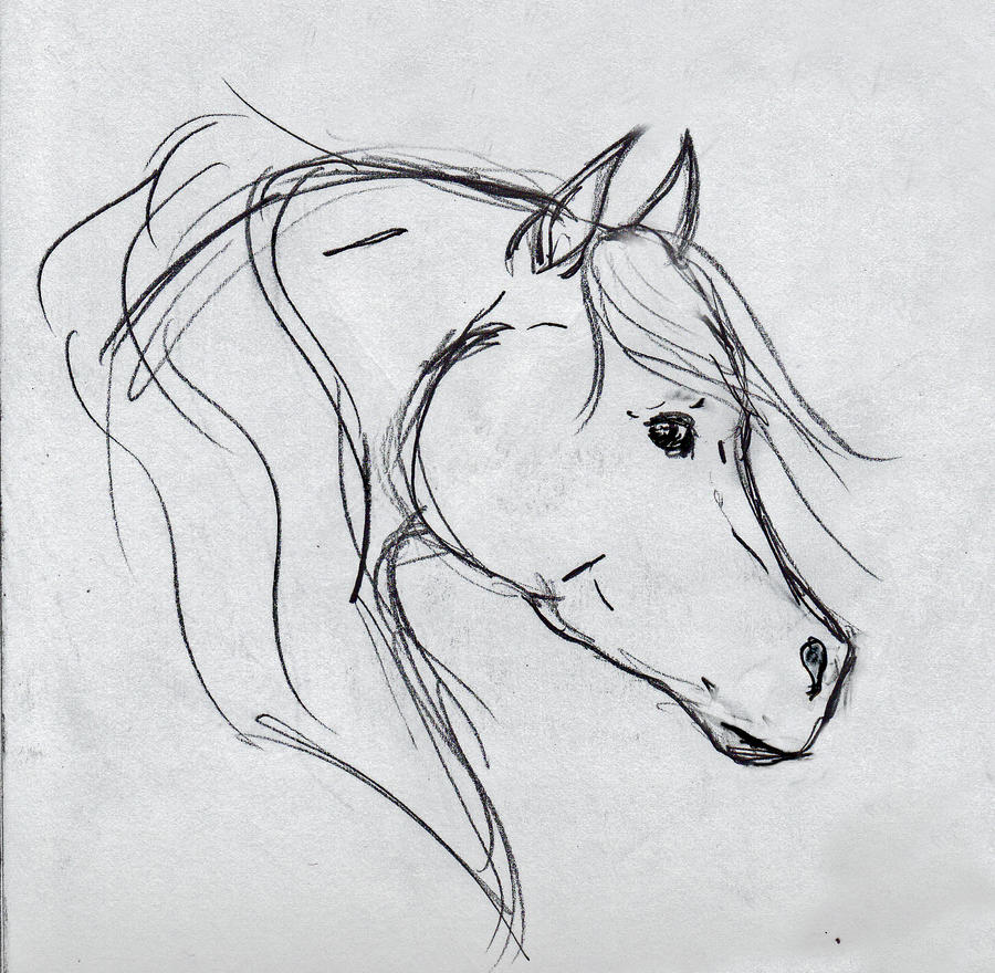 Horse Head Sketch By OnlyYouCan On DeviantArt