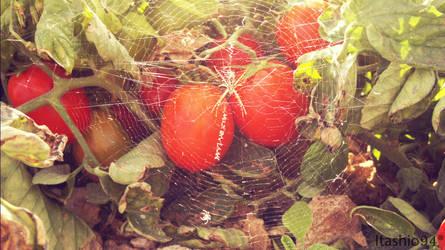 Random picture - Spider web