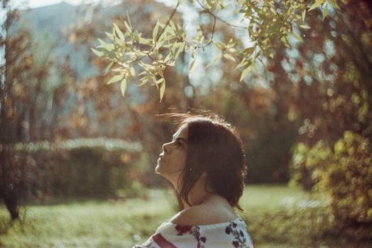 Symphony of the autumn sun