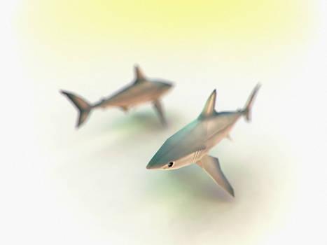 Duke HRP Shark