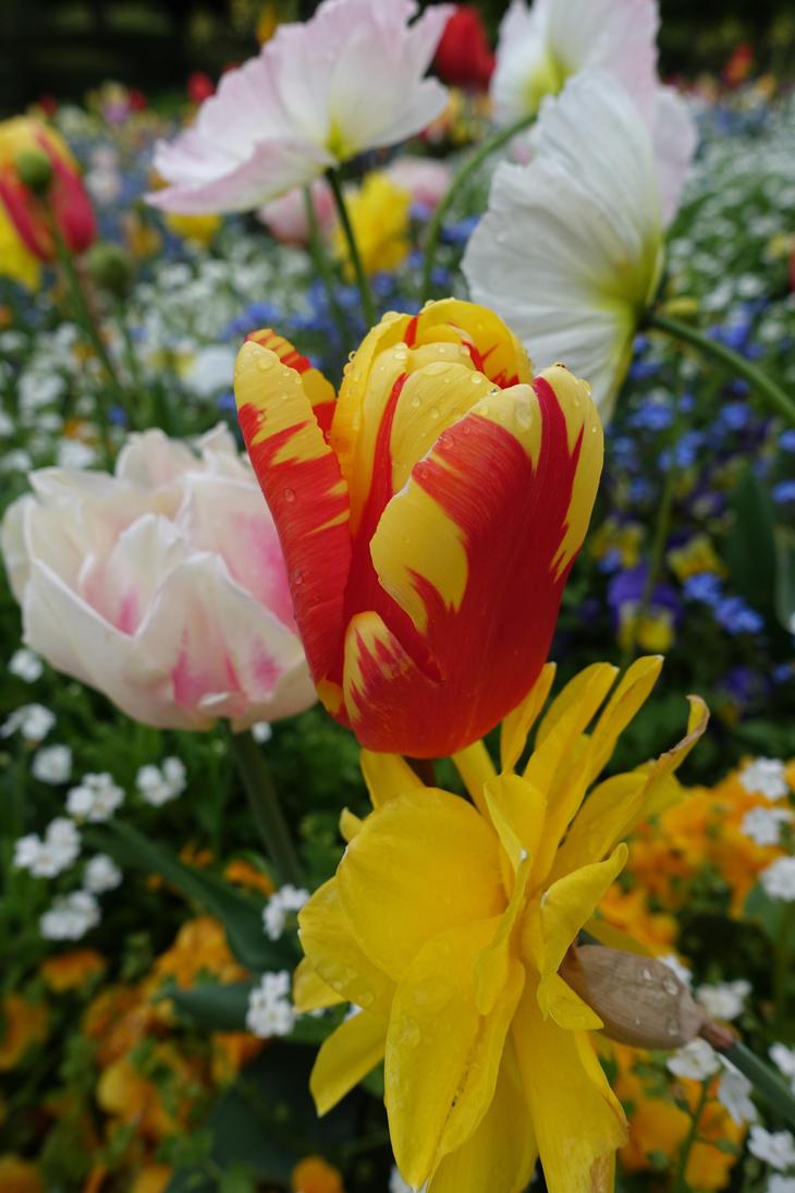 Blossom by snake0644