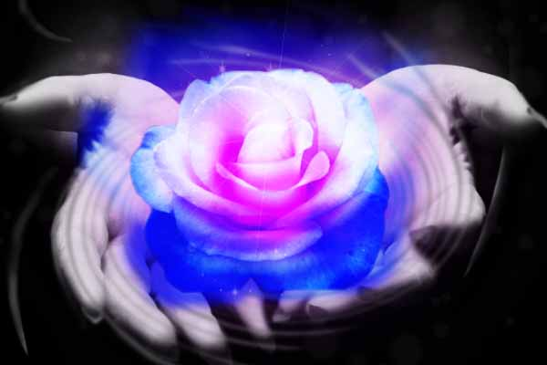 Smexy's Rose by IvyDarkRose