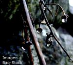Spring Pic1 by Shanzanahsyt