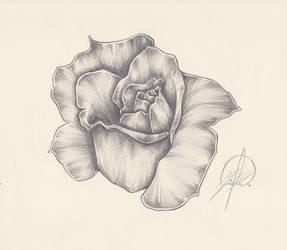 Rose Squeeze
