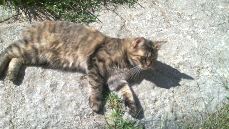 Cat Pic by Foldo